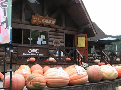 大きいかぼちゃがお出迎え